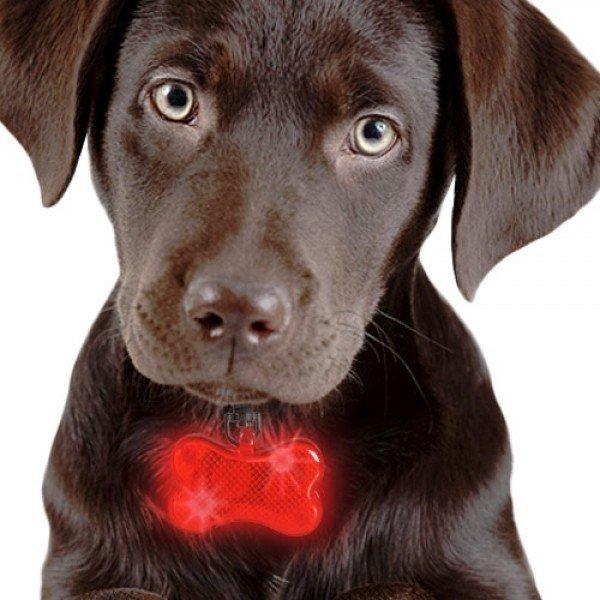 LED Namnbricka För Hundar