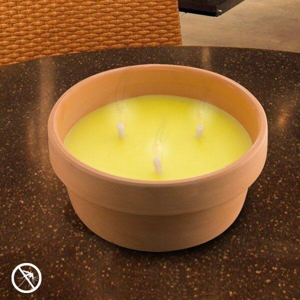 Citronellaljus I Terrakottakruka