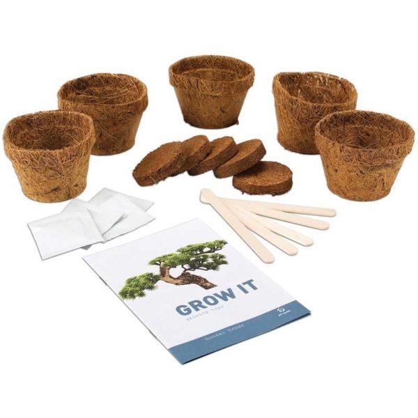 Odla Din Egen Bonsai Träd