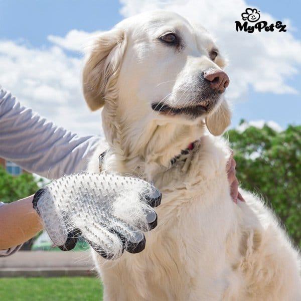 Handskborste För Husdjur